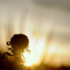 by Yann Estrada - Nature Up Close Flowers - 2011-2013