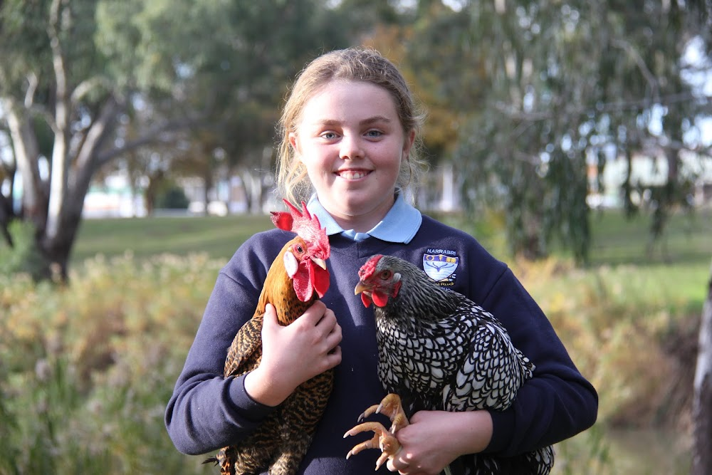 PRIZE WINNERS: Georgia Kirkby, 11, with a Gold Campine cockerel and Silver laced Wyandotte pullet who both starred at the recent Royal Canberra Poultry Show.