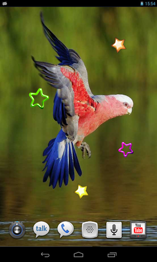 Parrots Voices cool HD LWP