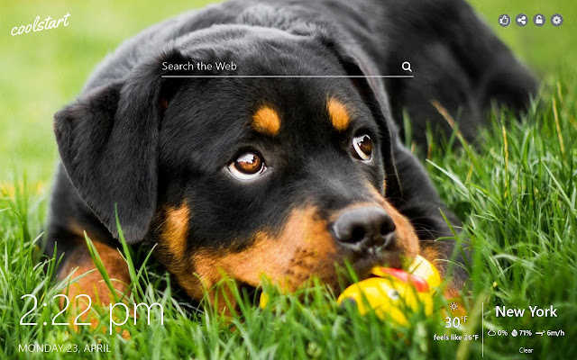Rottweiler HD Wallpapers Dogs N Puppies Theme