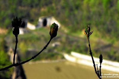 Valea Oltului de pe Muchia Puturoasei