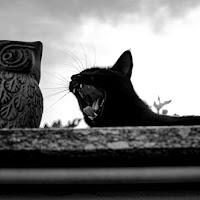 Gatto e Gufo di