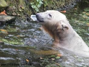 Photo: Knut hat ein Plastikteil entdeckt ;-)