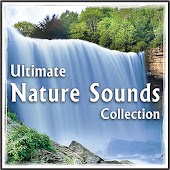 Forest Stream, Soothing Waterfall, Distant Birds for Massage Therapy