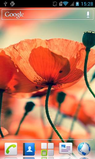 Poppies HD Live Wallpaper
