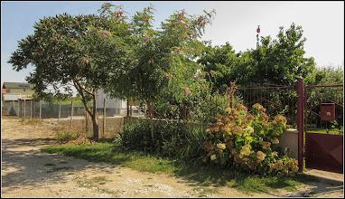 Photo: Salcâm rosu (Robinia hispida) - din Turda, Str. Ion Luca Caragiale - 2019.07.19