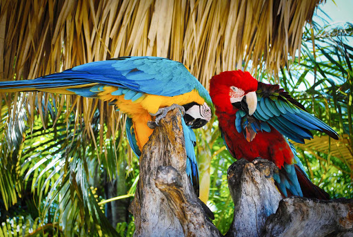 parrots-in-tropics.jpg - See parrots and other tropical birds on a trip to Cuba or the Dominican Republic.