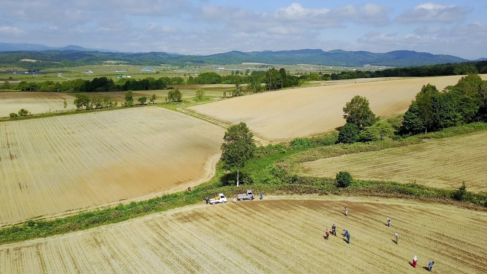 ひまわり油用畑(下方と上部左側と右側)
