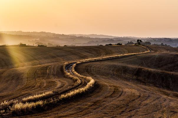 curve nel grano di francescoleonardis_photo