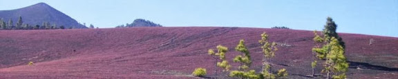 Llanos de Jable,blühende Hochebene,La Palma,Kanaren