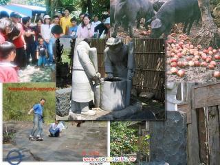 珈雅瑪的迦南美地