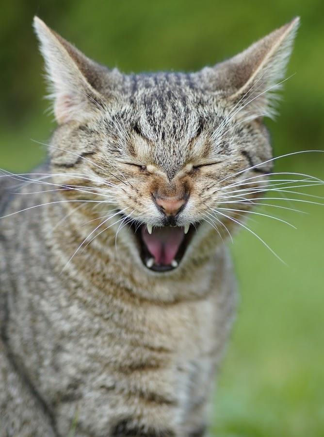 by Albin Bezjak - Animals - Cats Portraits