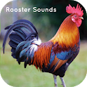 Rooster Sounds - Sleep & Relax icon