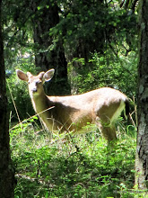 Photo: (Year 2) Day 334 - Deer on the Way to the English Camp