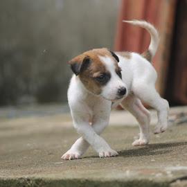 dancing by Vivek Chethan Muliya - Animals - Dogs Puppies ( dancing, dogs, animals, puppies, cute )