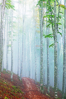 Luci d'autunno di Zaporogo