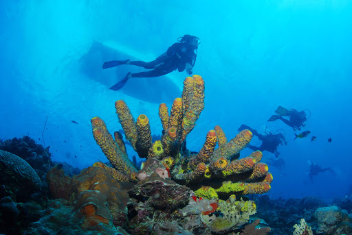 bonaire-coral-scuba.jpg - Scuba divers pass a bed of coral in the warm tropical waters of Bonaire.