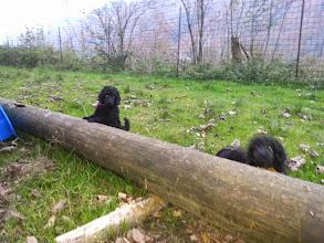 Photo: Indigo Girl und Ip Man vom Ronthaler Gütl im Garten