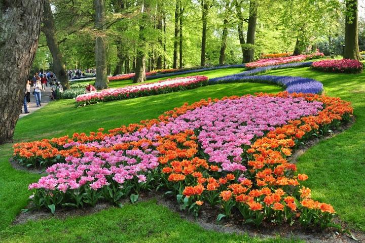 Keukenhof-สุดยอดสวนดอกไม้