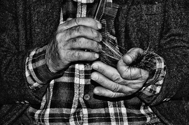 Il fabbricante di pennelli di ely50