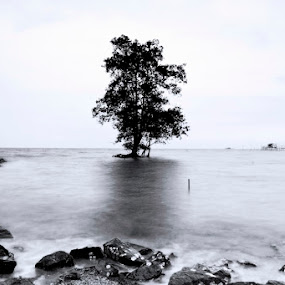 Lonely Tree by NorAzam Silverkenari - Landscapes Waterscapes ( waterscape, black and white photography, seascape, landscape, lonely tree )