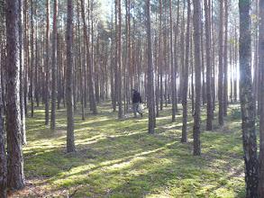 Photo: Las jaki jest każdy widzi.