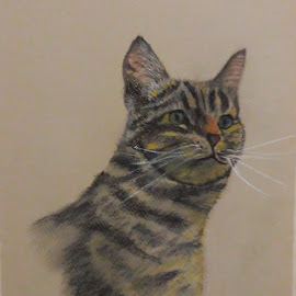 cat by Franky Vanlerberghe - Drawing All Drawing ( pastel pencil drawing, cat, cat portrait )