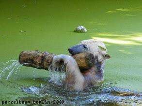 Photo: Der Baumstamm wird geschwenkt ;-)