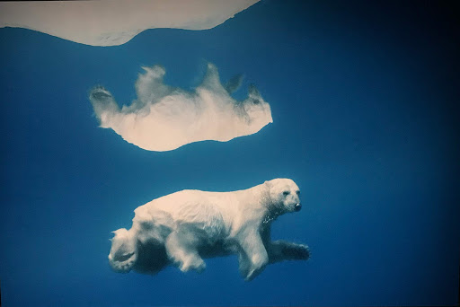 """Reflection Bear,"" an example of wildlife photography at Fotografiska in the Södermalm district of Stockholm."