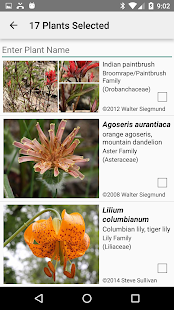 Mt Rainier Wildflowers- screenshot thumbnail