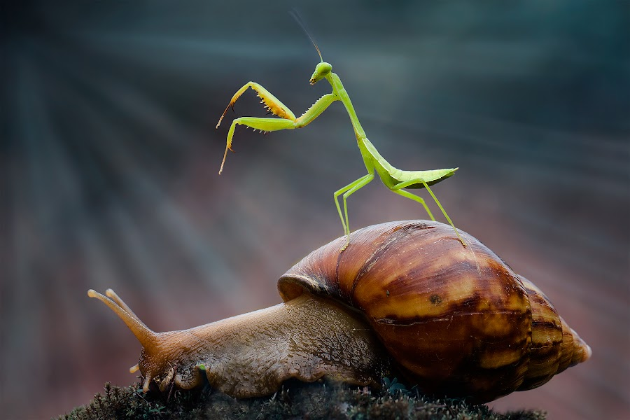 snail and mantis by Hendy Mp - Animals Other
