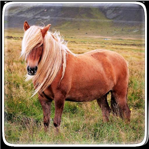 Pony Horse Live Wallpaper Icon