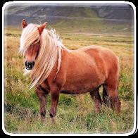 Pony Horse Live Wallpaper