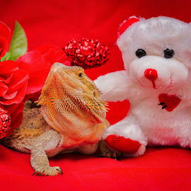 Be My Lover by Lourdes Olartecoechea - Public Holidays Valentines Day ( love, bearded dragon, valentine's day, reptiles, sex, holiday, valentines day, lizards )