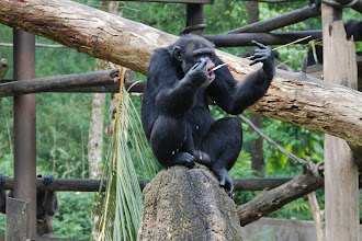 Photo: The gorilla has a stick which he dips into milk and honey (found inside the rock he is sitting on)