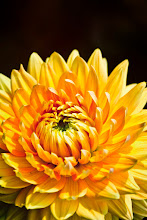 """Photo: """"Don't surrender all your joy for an idea you used to have about yourself that isn't true anymore.""""~ Cheryl Strayed     http://www.redbubble.com/people/inspiraimage/works/23477535    #ColorsOnFriday +ColorsOnFriday #flowercolors +//flower colors// #10000photographersaroundtheworld #yellowcircle  It's #FloralFriday ! The +FloralFriday theme was created by +Tamara Pruessner and is co-curated by +Beth Akerman, +Kiki Nelson, and +Eustace James. #Macro4All by +Bill Urwin, +Thomas Kirchen, +Walter Soestbergen (+Macro4All ) #YisforYellow +YisforYellow #hqspflowers +HQSP Flowers curated by +Francine Vanlé +Iva Pas Photography +kaatje jansen +Wayne Lu #PhotoManiaUK +Photo Mania UK curated by +Hans-Juergen Werner and +Chandro Ji"""