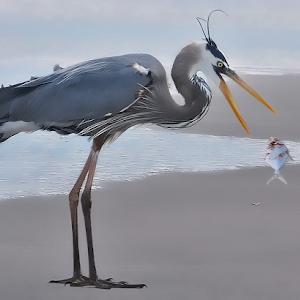 Great Blue Heron 036.jpg