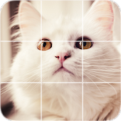 Picture Puzzle: Persian Cats