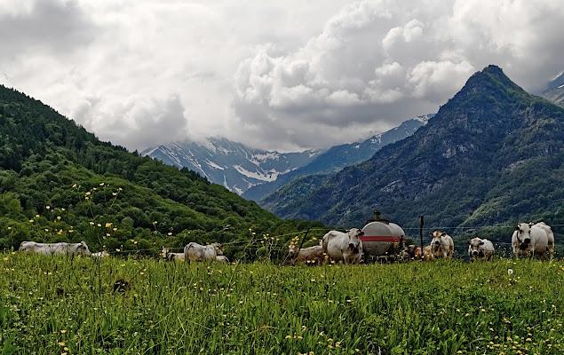 Pascolo in Val Pellice di FZATOX