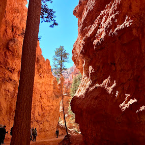 Beautiful Bryce by Rob King - Novices Only Landscapes