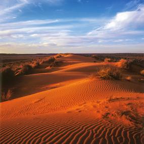 Big Red dune, Queensland by Annette Flottwell - Landscapes Deserts ( simpson desert, sand, 4x5, dunes, sunset, qld, birdsville, desert,  )