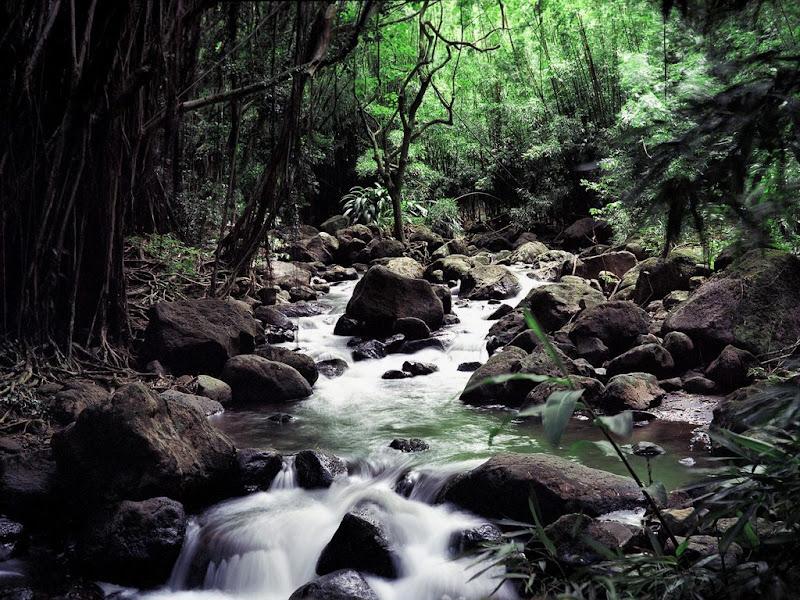 Photo: Hutan Tarakan