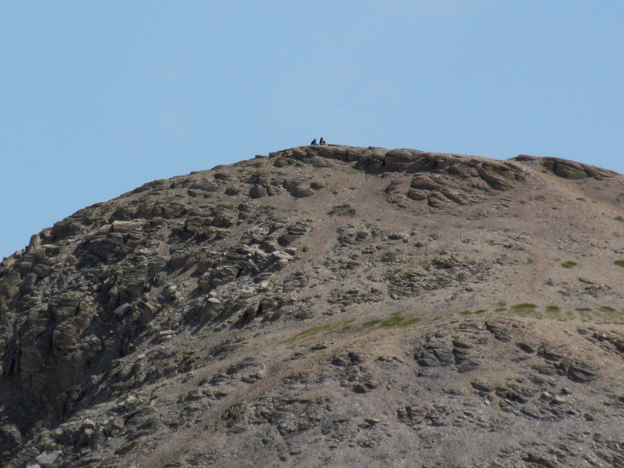 Photo: Hikers atop Trico Peak