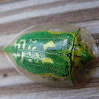 Escarabajo tortuga