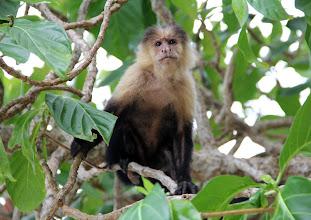 """Photo: Unter Beobachtung! (Bemerkung: google schlägt mir vor das Gesicht des Affen zu """"taggen"""", sprich eine Person zu markieren :D - wer will?)"""