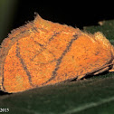 Yellow-collared Slug Moth