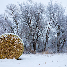 New Blanket by Matt Workman - Landscapes Weather ( farm, winter, snow, trees, farmland, landscape )