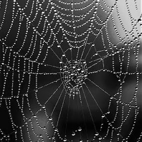 Fog Web by RichandCheryl Shaffer - Nature Up Close Webs ( #fog # web #water #masterpiece )
