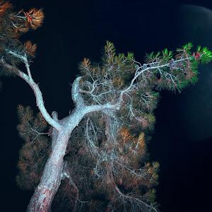 mjesec drvo.jpg