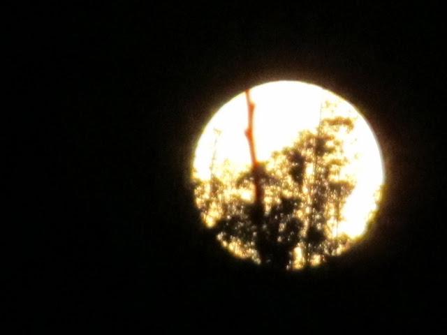 La luna - Página 3 IMG_0320